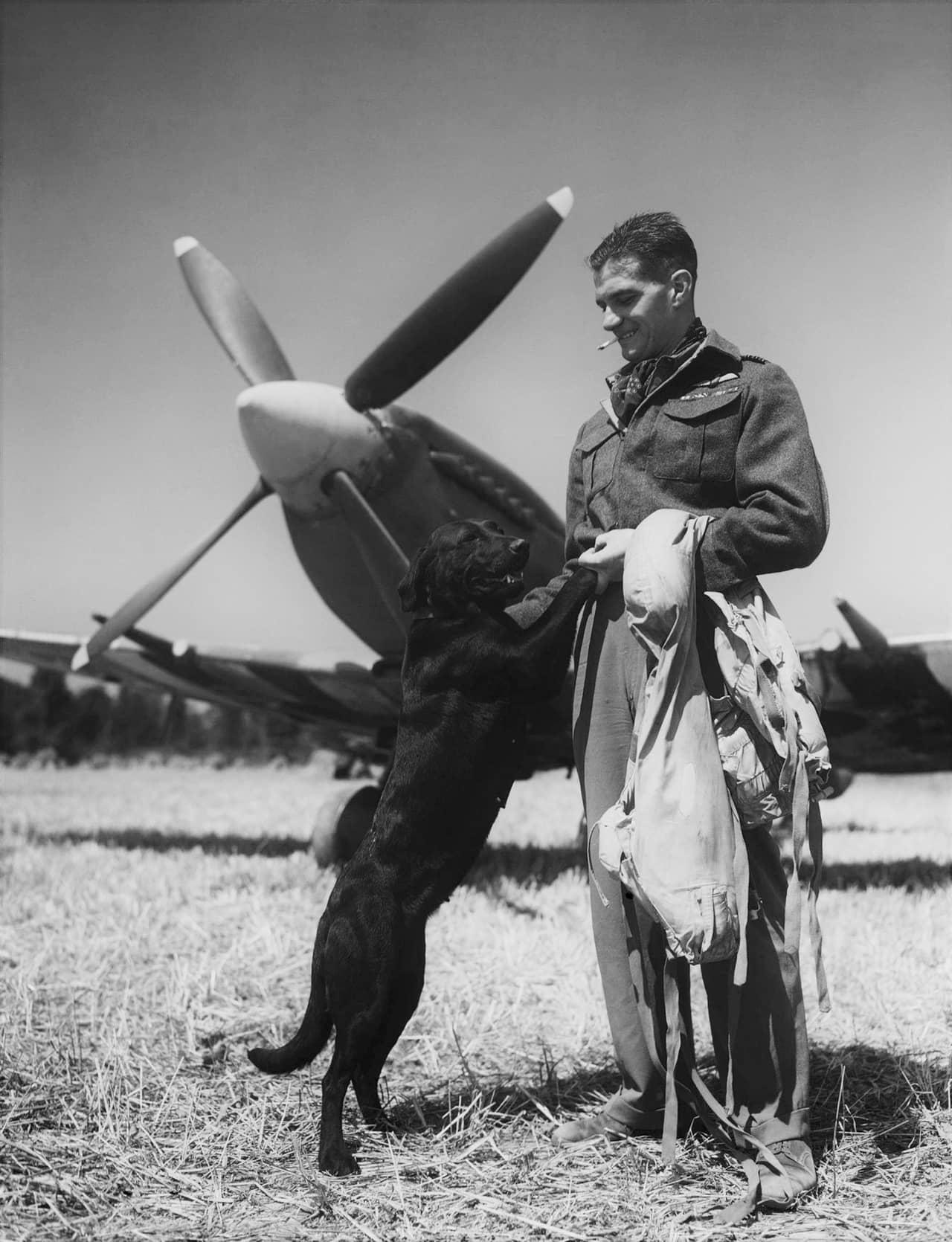 スーパーマリン・スピットファイア(グリフォン搭載型)×ジェームズ・エドガー・ジョンソン~ジョンブル魂を象徴する名戦闘機